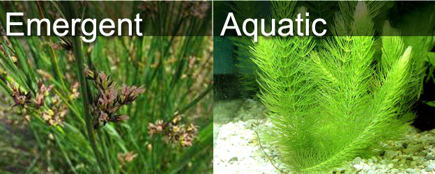 list of aquatic plants pdf